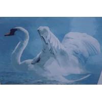 Белый лебедь (50х40)