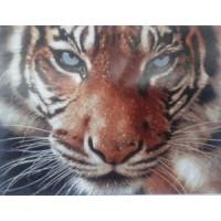 Тигр (50х40)
