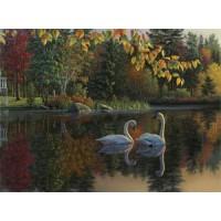 Лебеди осенью (70х50) д/б