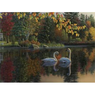 Лебеди осенью (70х50) о/б